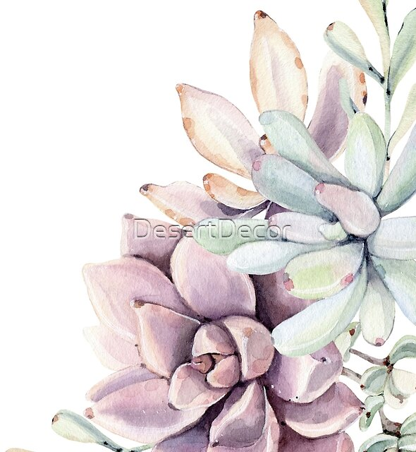 Elegant Succulents Mint Green and Pink on White Desert Succulent Southwest Art II by DesertDecor