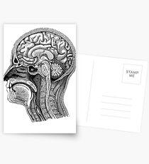 Anatomical Brain Drawing Postcards