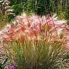 Squirrel Tail grass by Yukondick