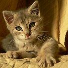Playful Kitten by Fleur Hallam