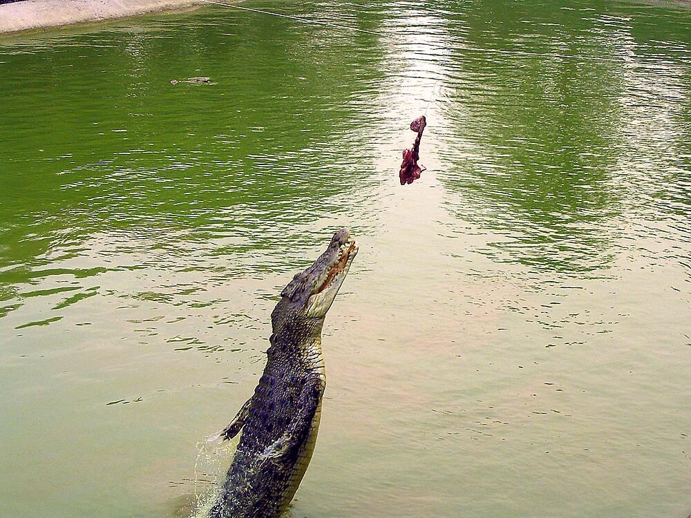 Crocodile by cometh