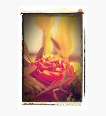 Eine rote Rose... Photographic Print