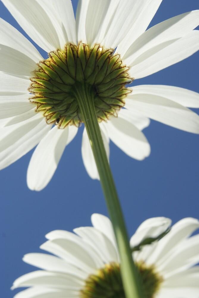 Upsy Daisy by BugieDesign