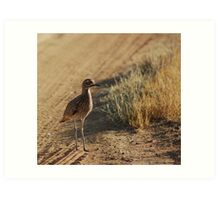 Spotted Thick-Knee Art Print