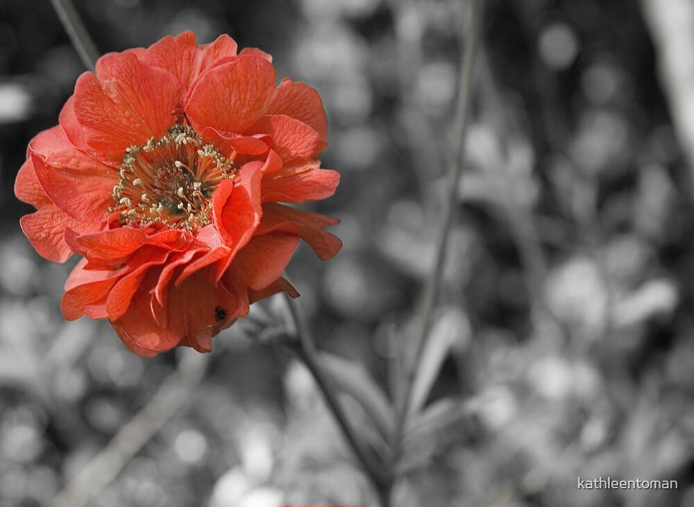 red by kathleentoman