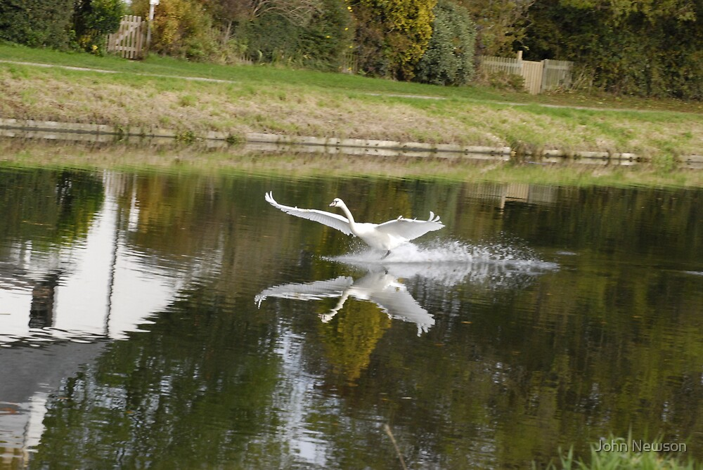 set Flying Swans over River Cam 7 of 9 by John Newson