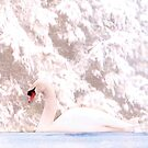 Winter Swan by AngieDavies