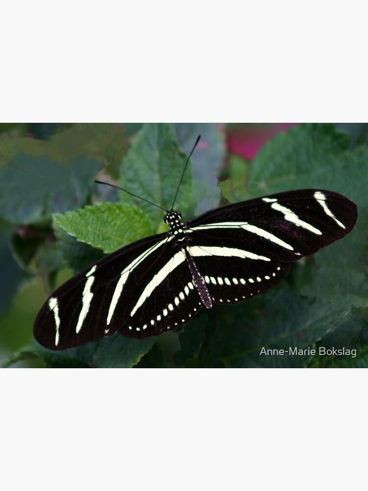 Zebra Longwing by amb1946
