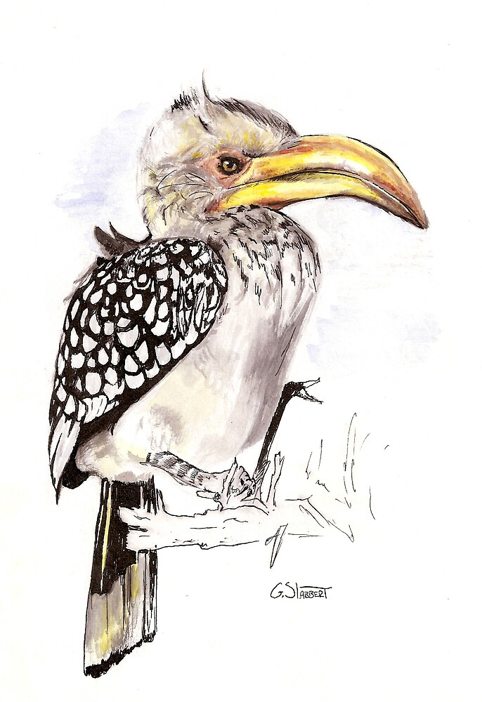 yellow billed hornbill by Grant Slabbert