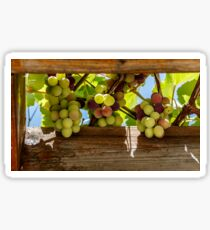 bunches of grapes against the sky in a wooden frame Sticker