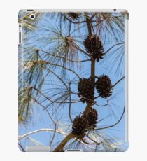 Cones on a coniferous tree against a blue sky iPad Case/Skin