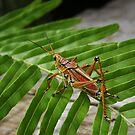 Mr. Grasshopper  by photo4sale