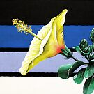receptive hibiscus by Sybil Alfano