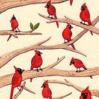 «Cardenales» de Sophie Corrigan