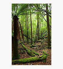 Serene and Green - Mt Field National Park,Tasmania Photographic Print