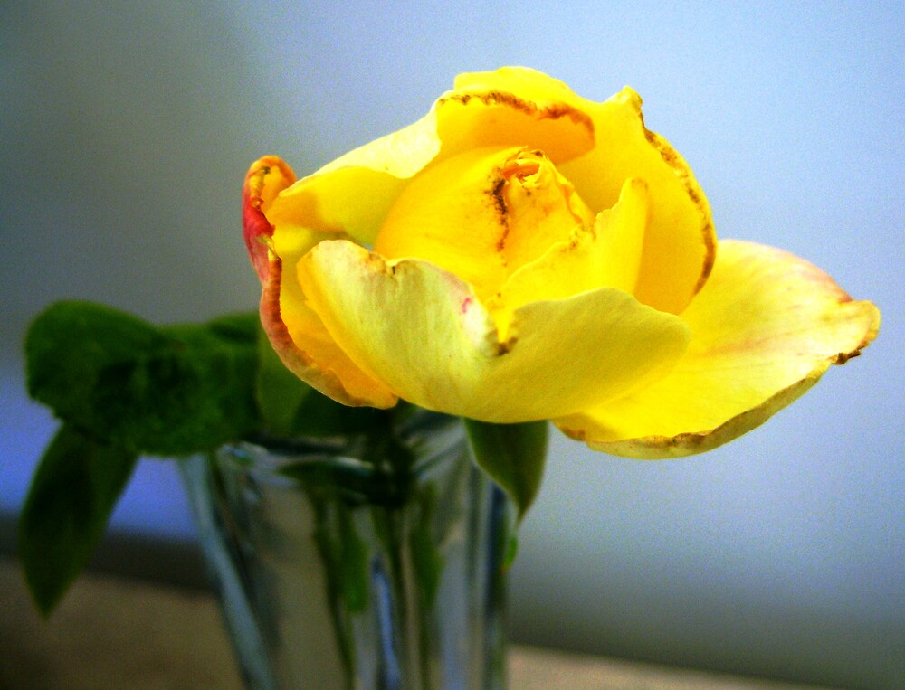 Yellow Opening  by Judi Taylor