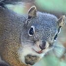 The Baby Pine Squirrel by Betsy  Seeton
