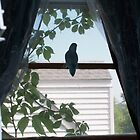 Alone on the Window Sill  by SkylarMuller