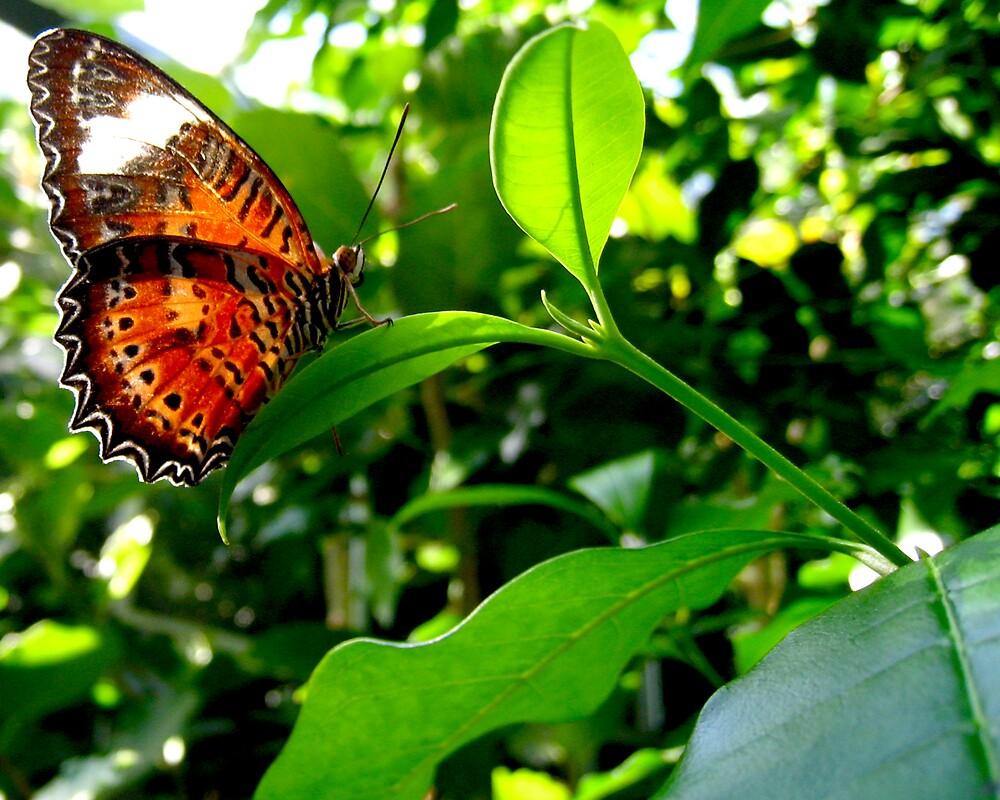 Butterfly I by Daz Zammit