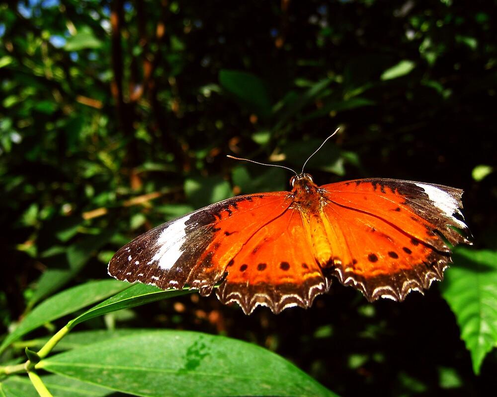 Butterflies III by Daz Zammit