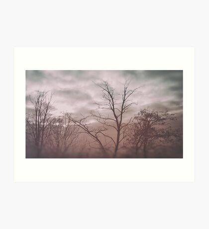 photo TREES #tree #photo Art Print