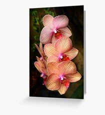 Phalaenopsis - A set of beauties Greeting Card