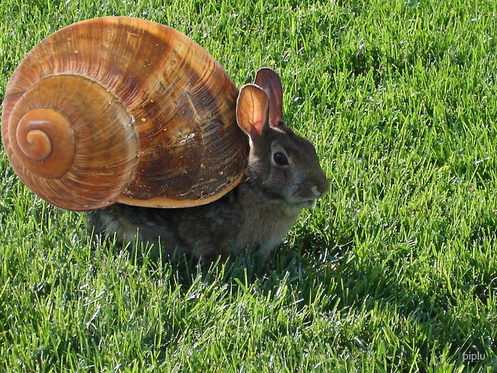 fastest snail by piplu