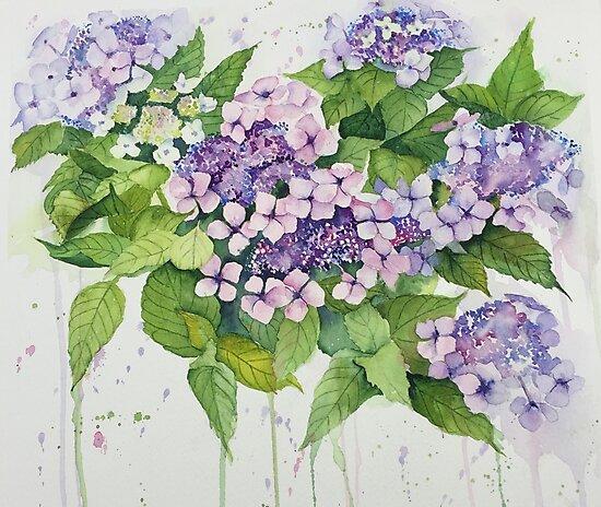 Lavender Lace Cap Floral by Elaine Hill