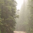 Dirt Road Challenge Into the Mist by Bo Insogna