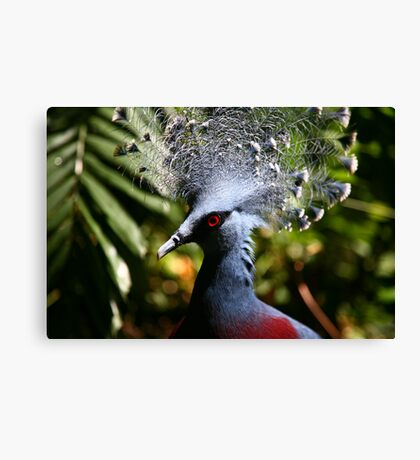 Victoria Crowned-Pigeon Canvas Print