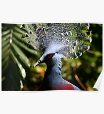 Victoria Crowned-Pigeon Poster