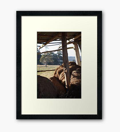 hays in Framed Print