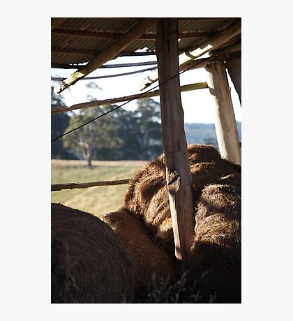 hays in Photographic Print