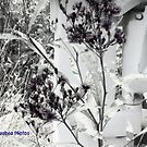 Black n White Weeds 1 by peabea