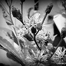 Weeds Black n White 2 by peabea