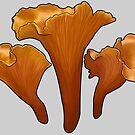 Cantharellus cibarius by microcosmicshop