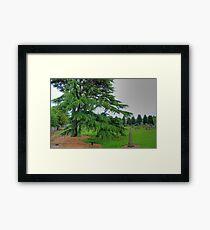 Abercorn Greenery Framed Print