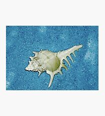 Blue Sand and Sea Shell  Photographic Print