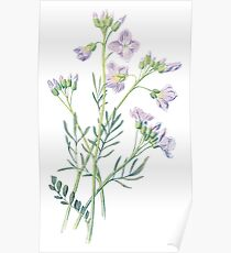 Ladys Smock Plant Art Painting Poster