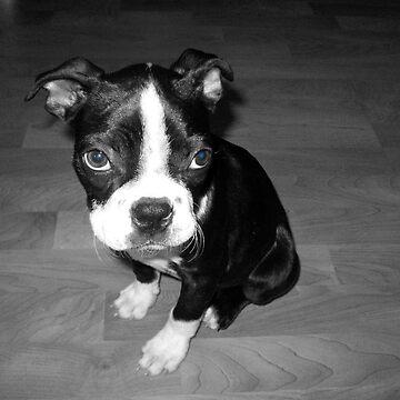 Blue-Eyed Louie by rpiercey