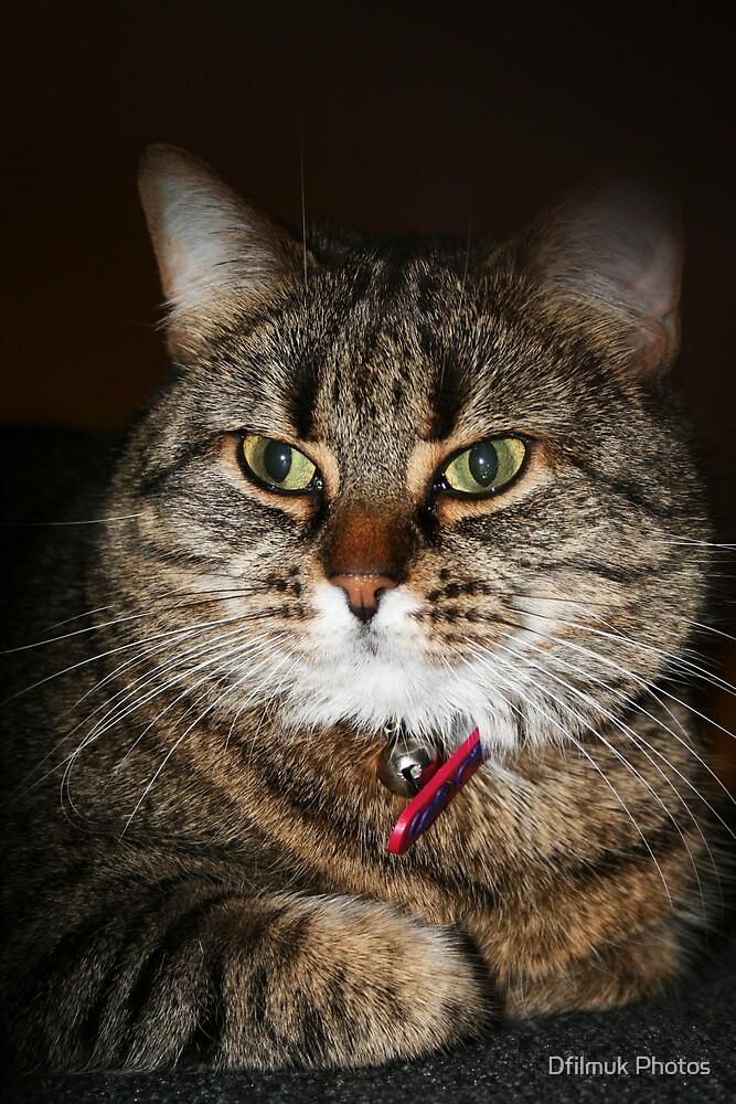 Cat by Dfilmuk Photos