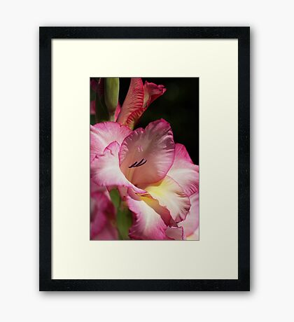 Gladiolus In Pink Framed Print