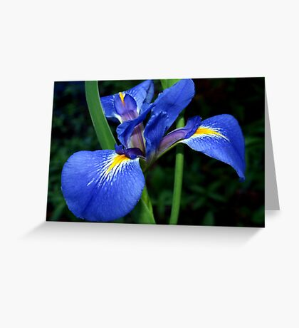 Blue flag beauty Greeting Card