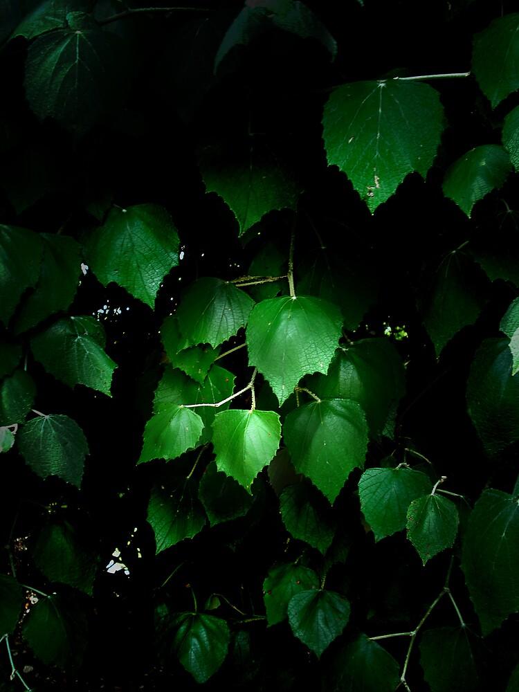 Grapevine by webart
