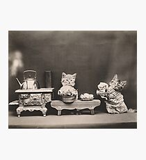 Kittens in the kitchen Photographic Print