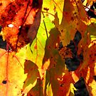 Fabulous Fall by Rosie Brown