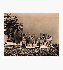 Kittens having a picnic Photographic Print