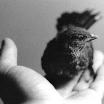 A Bird In Hand by SprungNoggin