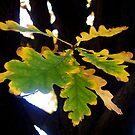 Suspended Oak Leaf by Pamela Hubbard