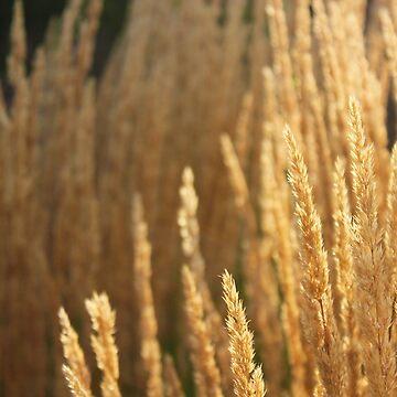 Grasses by MattSauder
